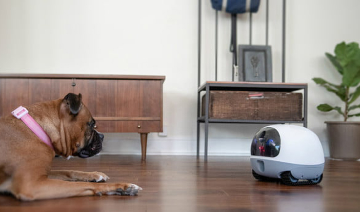 VAVA Mobile Pet Cam – Pets own Robot partner-GadgetAny